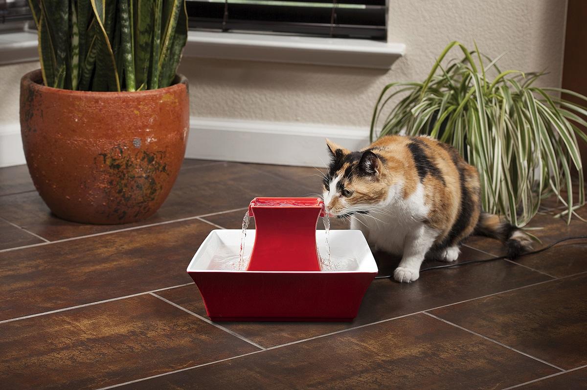 gatto che beve da fontanella