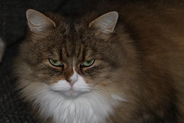 gatto sguardo strano