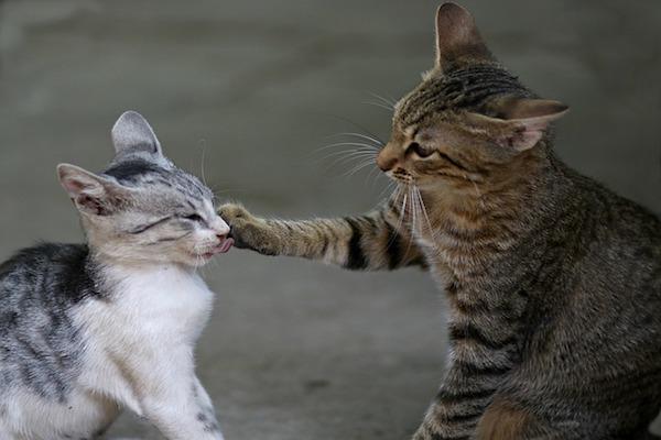 gatti vogliono contatto e giocano