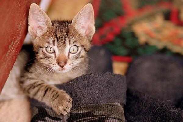 gattino osserva curioso