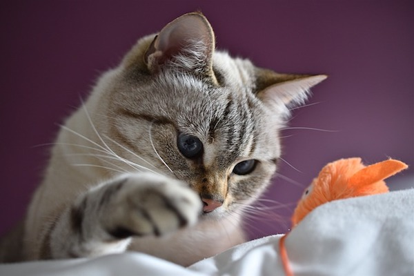 gattino si diverte