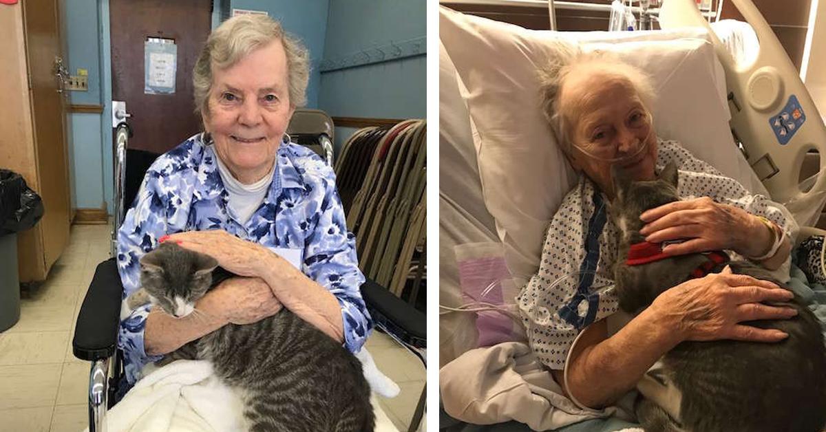 Gattino in ospedale con la proprietaria