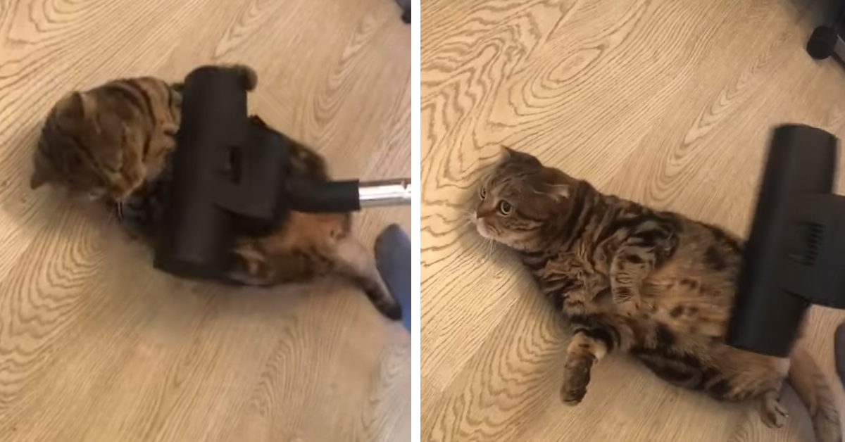 Gatto con aspirapolvere
