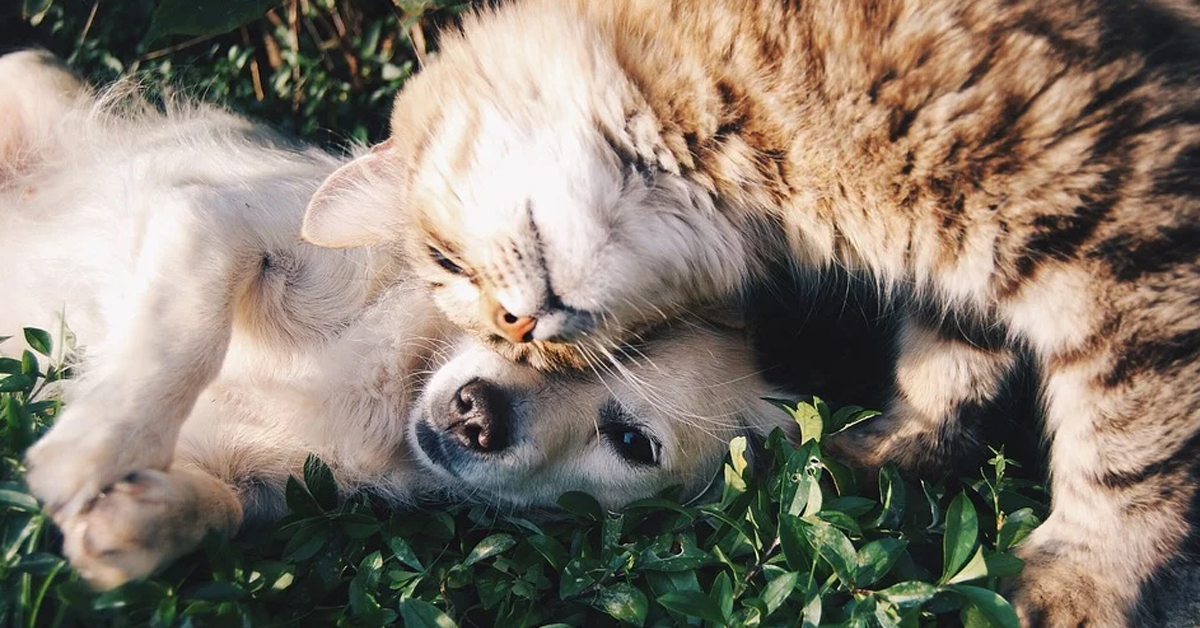 Gatto con cane