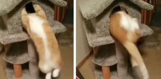 Il-gattino-fa-i-piegamenti-e-il-video-fa-il-giro-del-web1