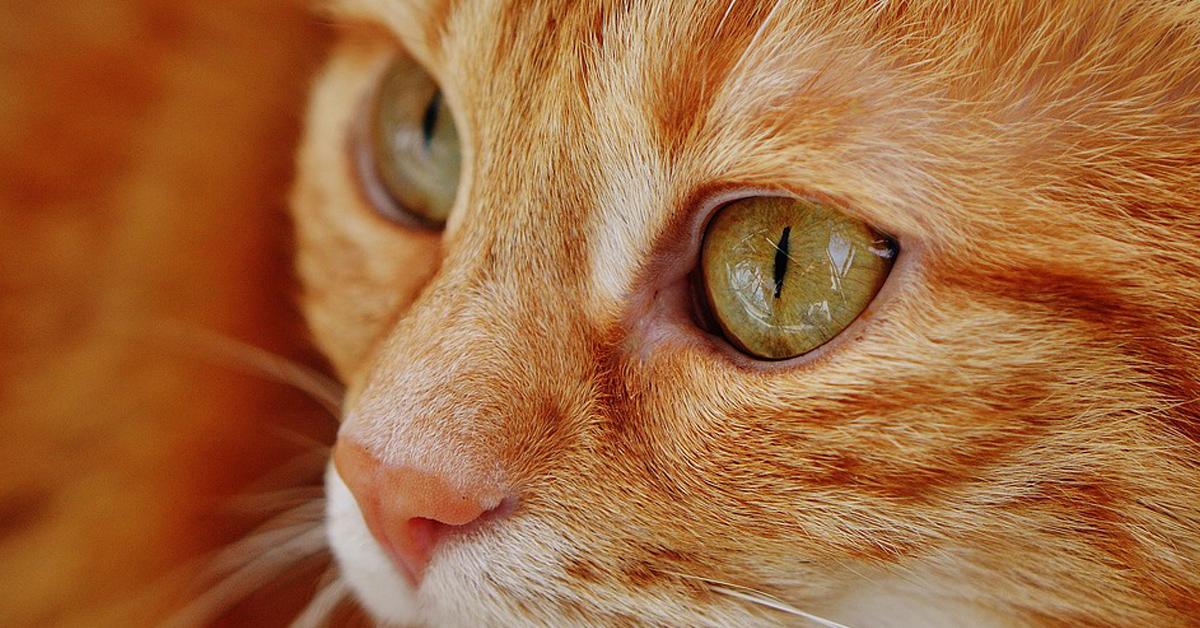 Il-gattino-fa-i-piegamenti-e-il-video-fa-il-giro-del-web2