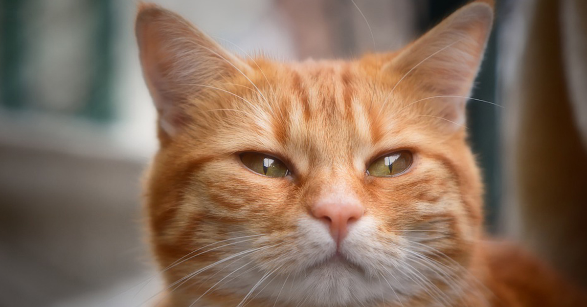 Il-gattino-fa-i-piegamenti-e-il-video-fa-il-giro-del-web3