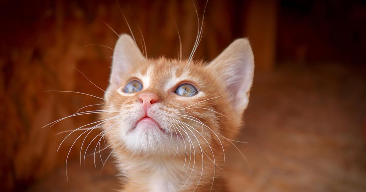 Il-gattino-fa-i-piegamenti-e-il-video-fa-il-giro-del-web4