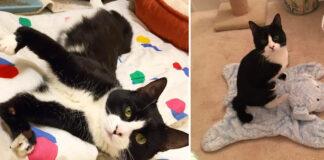 Ivan-il-gattino-che-nessuno-voleva-adottare-per-i-suoi-limiti-fisici-il-video-della-rinascita