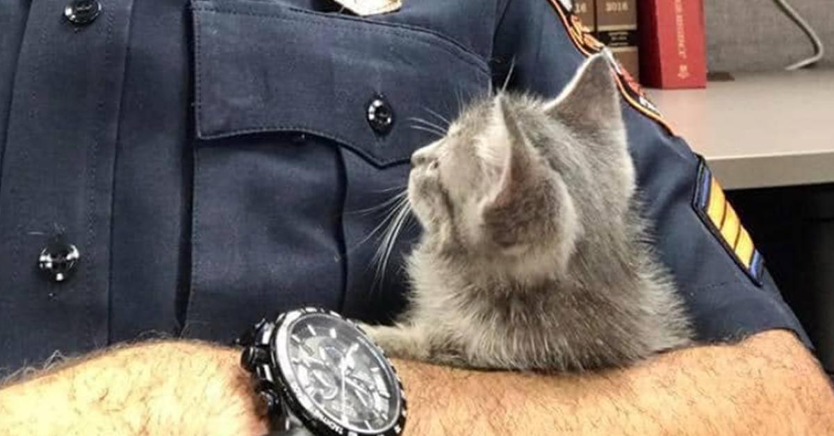 Gattino con poliziotto