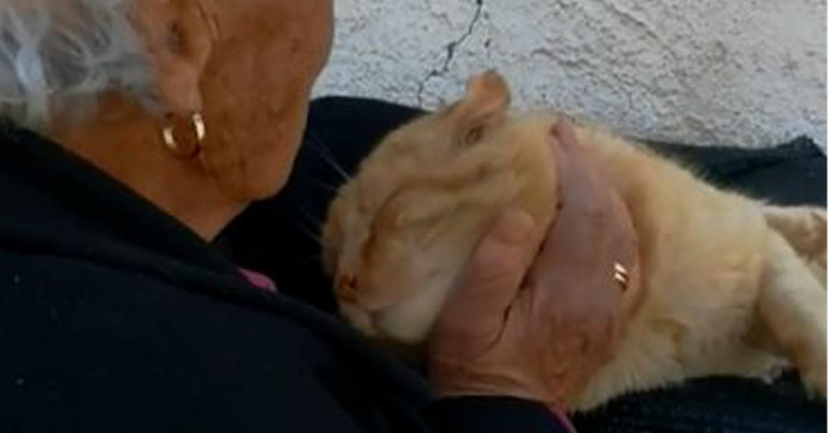 Gattino con anziana