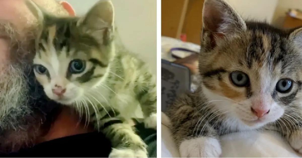 gattina-spalla-padrone