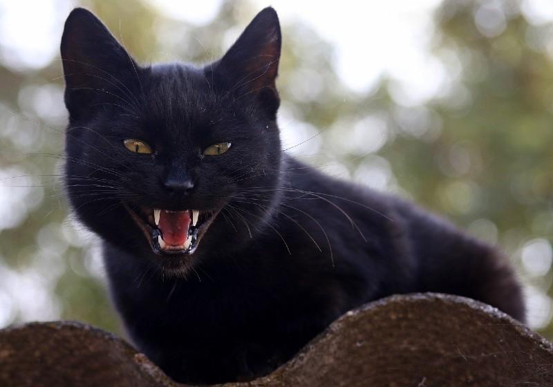 Gatto e denti