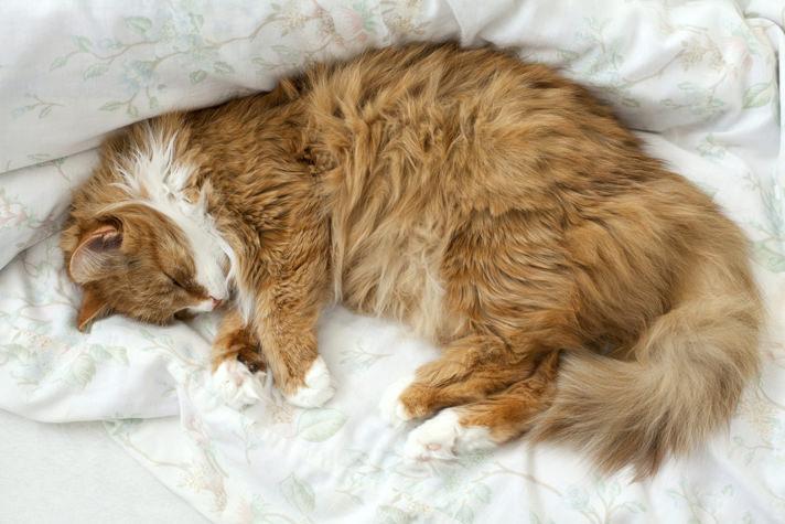 gatto anziano che dorme