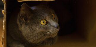 gatto anziano dentro scatola