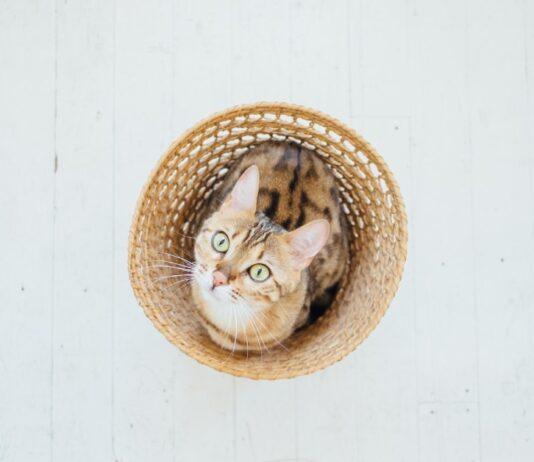 Gatti e cerchi