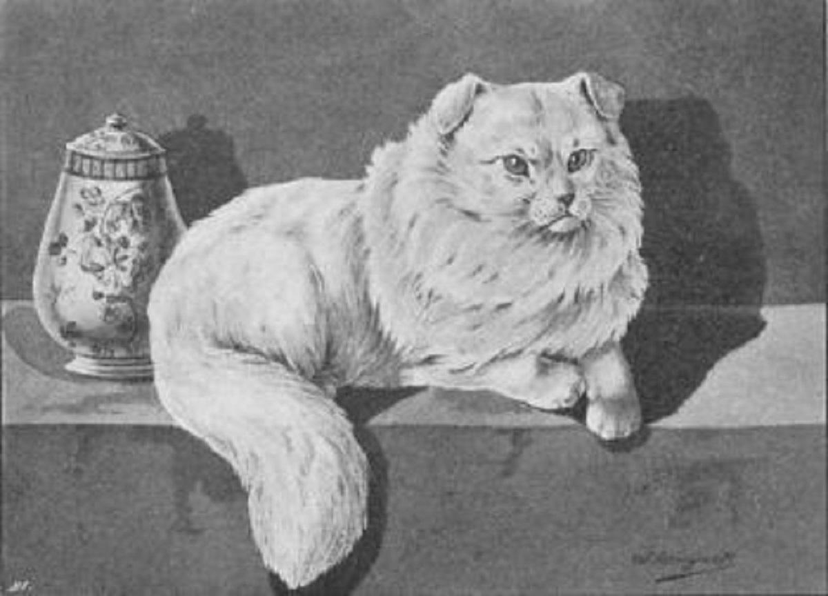 gatto sumxu