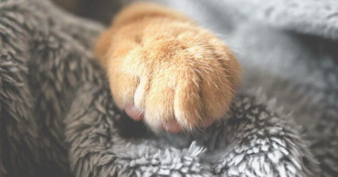 Gatti e vestiti