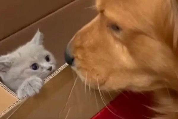 video ted gattino