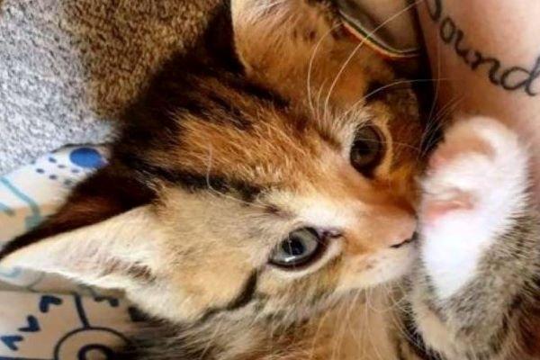 wildfire gattino