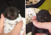 Gattino con una malformazione al naso