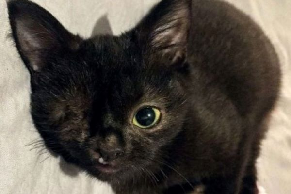 ana gattino occhio