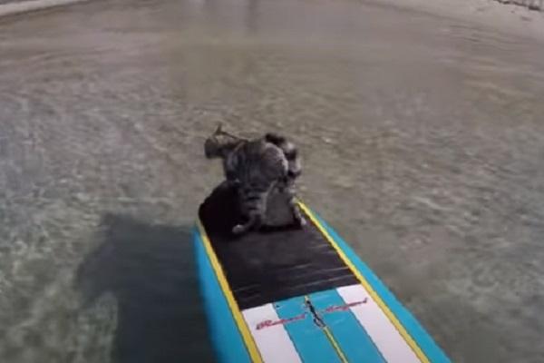 bobo gattino surf video