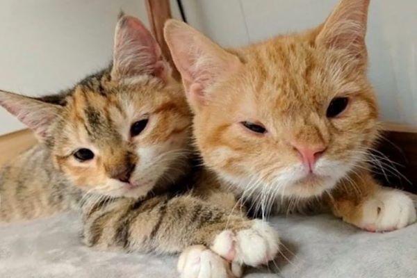 calliope gatto fratello video