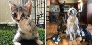 Gattino con due zampe