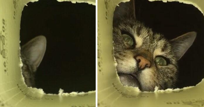 Gatto guarda in una scatola
