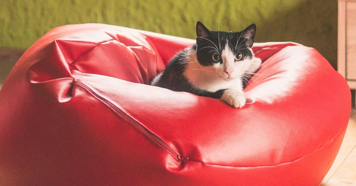 Gattino in un pouf