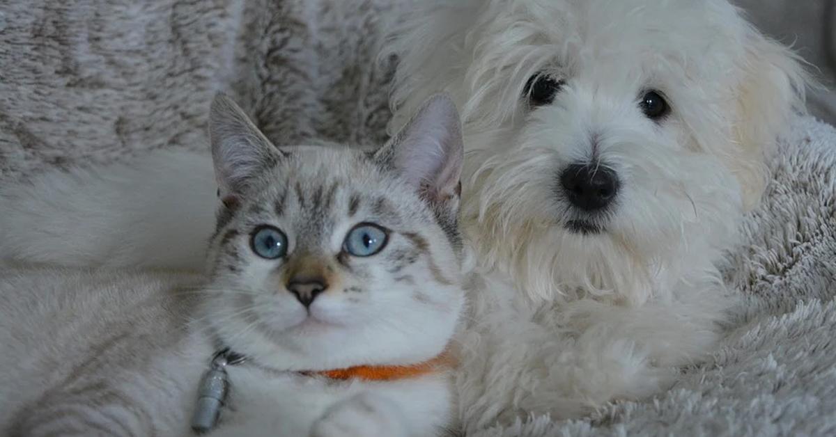 Gatto e cane che osservano