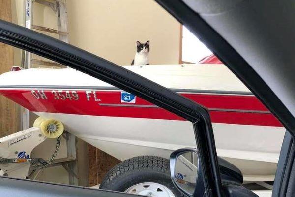 gattino randagio garage