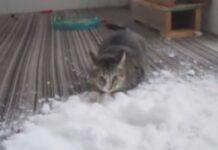 Gatto gioca con la neve