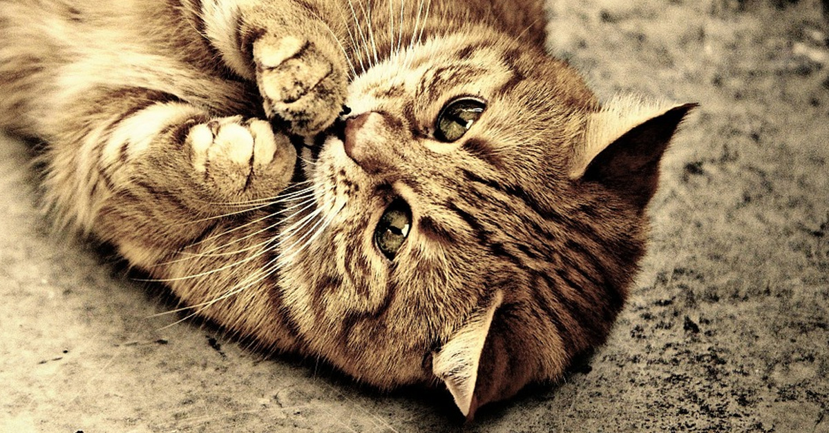 Gatto sulla schiena