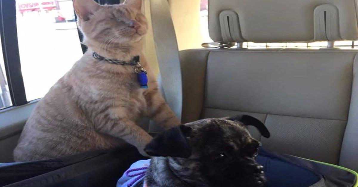 Gattino cieco con cane