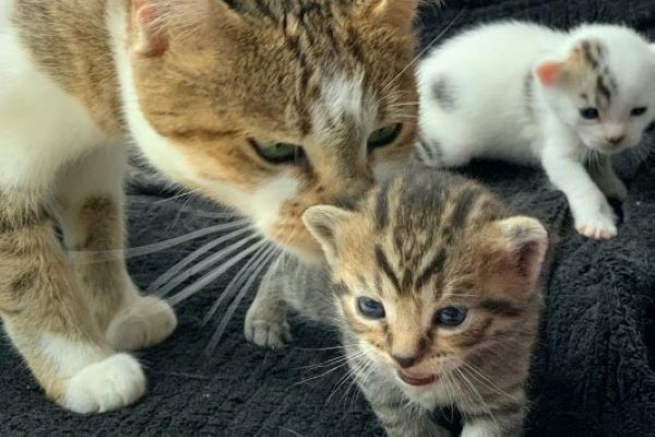 olaf gattino salvato