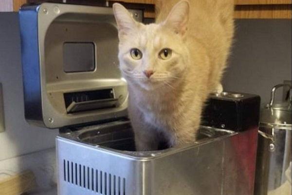 oliver gattino nascondigli