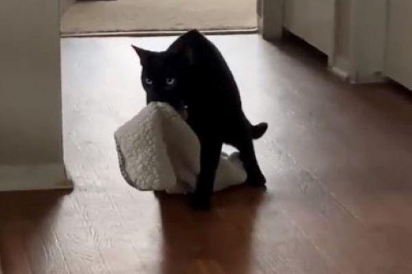renly gattino coperta