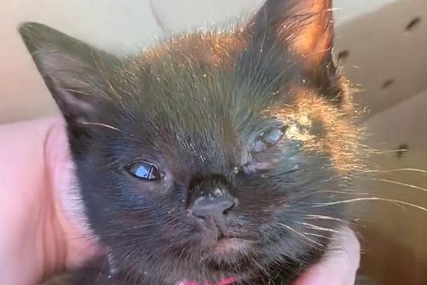 schmutzie gattino salvato video