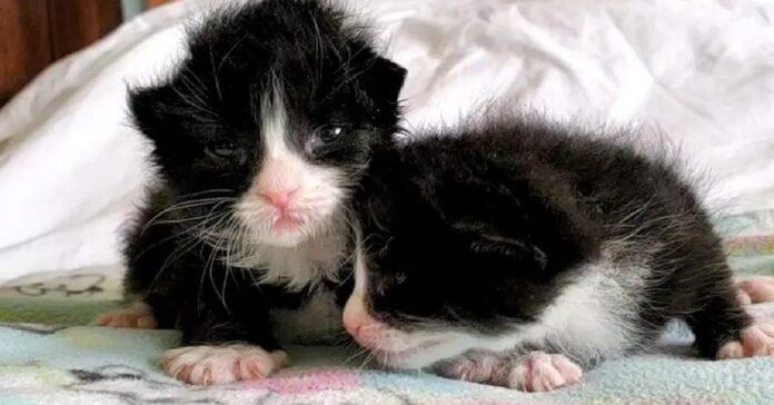 gattini salvati