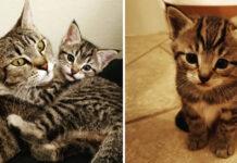 Gattino con la madre