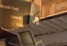 gattino-salvato-da-un-benevolo-anziano-video