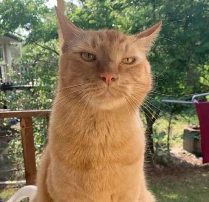 nacho gatto comportamento
