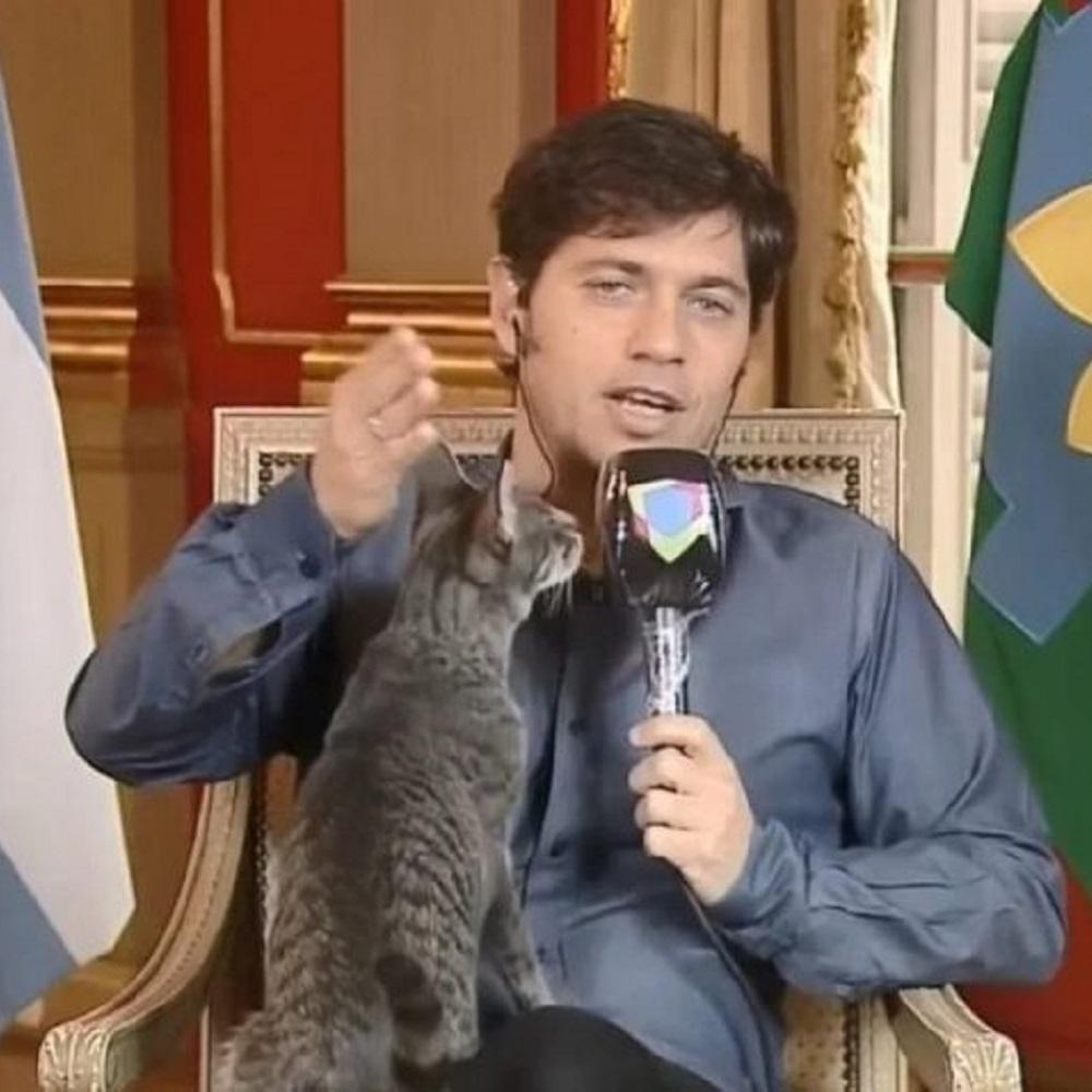 gatto kicillof governatore