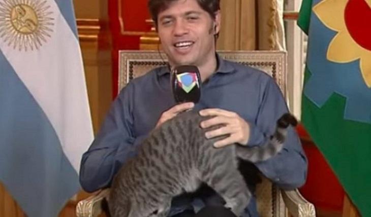 gatto interrompe discorso