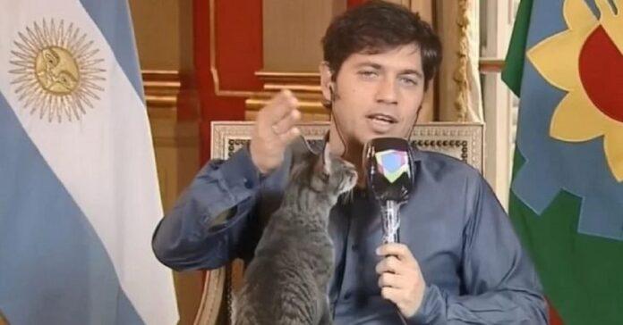 gatto-interrompe-il-governatore-di-buenos-aires-durante-il-suo-discorso-video