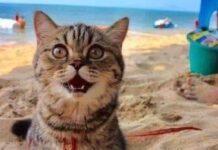 gatto-va-in-spiaggia-per-la-prima-volta-la-sua-felicita-e-incontenibile