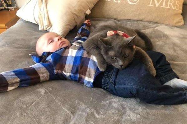 Grace il gatto