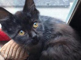 il-salvataggio-del-gattino-marvel-trovato-a-dormire-fuori-da-solo-video